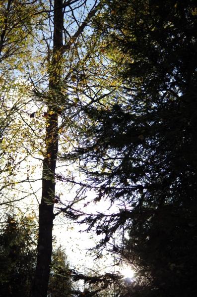 Päike läbi puude