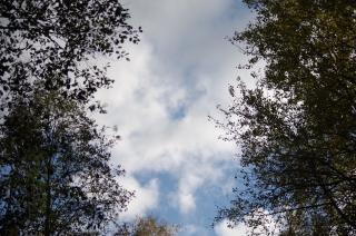 Taevas - läbi leppade ja haabade