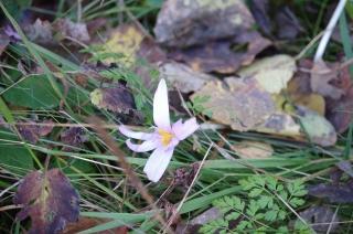Külma võetud lill